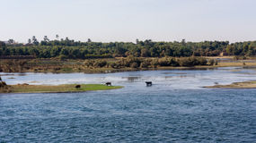 Cruzeiro do Nilo de Egito, um agradável imagem de stock