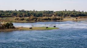 Cruzeiro do Nilo de Egito, um agradável fotos de stock royalty free