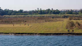 Cruzeiro do Nilo de Egito, um agradável fotografia de stock royalty free
