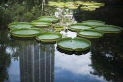Cruziana et gratte-ciel de Victoria Photos libres de droits