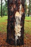Cry tree Stock Photo