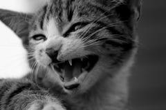 Crying cat royalty free stock photos