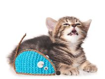 Crying kitten Stock Images