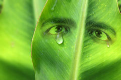 Crying mother nature conservation concept Stock Photography