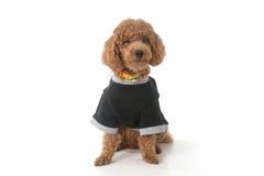 Crying pup Royalty Free Stock Photos
