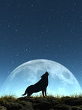 Crying Wolf Royalty Free Stock Image