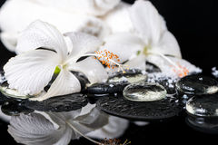 Cryogenic spa concept of delicate white hibiscus, zen stones wit Royalty Free Stock Photos