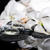 Cryogenic spa concept of delicate white hibiscus, zen stones wit Stock Photography