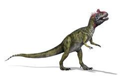 Cryolophosaurus Royaltyfri Fotografi