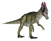 Cryolophosaurusdinosaurus die 3D lopen - geef terug Stock Afbeeldingen