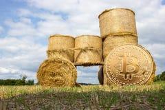Crypto ψηφιακό χρυσό νόμισμα νομίσματος - περίληψη Στοκ Εικόνες