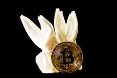 Crypto valuta guld- Bitcoin, BTC, makroskott av Bitcoin myntar w royaltyfria bilder