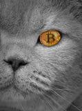Cryptocurrency de pure race d'oeil de bitcoin de chat Image stock