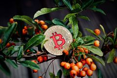 Bitcoin coin on the green tree. royalty free stock photography