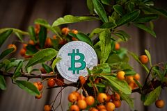 Bitcoin coin on the green tree. royalty free stock images