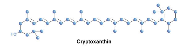 Cryptoxanthin carotenoid pigment. Cryptoxanthin is a natural carotenoid pigment. It has been isolated from a variety of sources including the petals and flowers Stock Photography