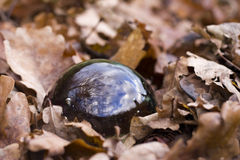 Crystal ball. In autumn foliage at forest soil Royalty Free Stock Image