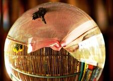Crystal ball in Dajia, Taiwan. Crystal ball sitting in Buddhist temple, in Dajia, Taiwan Stock Photos