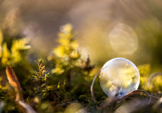 Crystal Ball en Forest Floor imagen de archivo libre de regalías