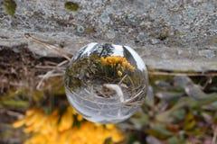 Crystal Ball en Gele Bloeiende Krokus Stock Fotografie