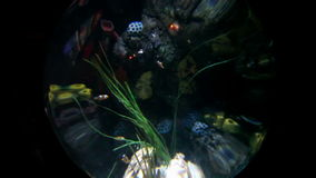Crystal ball of fishes. Shots of fishes swimming in aquarium stock video footage