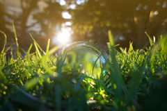 Crystal ball lying in the middle of grass patch Stock Photos