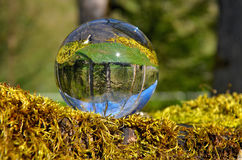 Crystal ball on moss Stock Images