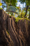 Crystal Ball Nature. Magic crystal ball on tree stump moss for autumn fantasy imagery Stock Photo