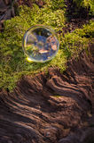 Crystal Ball Nature. Magic crystal ball on tree stump moss for autumn fantasy imagery Stock Image