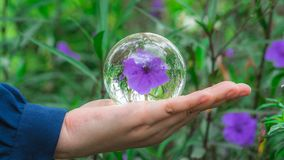 Crystal Ball With Purple Flower imagens de stock royalty free