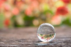 Crystal ball with reflection of red flowers on wood background.  Royalty Free Stock Photo