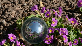 Crystal ball and spring flowers in  wind Royalty Free Stock Image