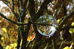 Crystal ball in the tree and sunlight Stock Images