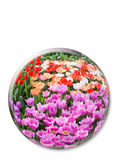 Crystal ball with various colored tulips on white background Royalty Free Stock Image
