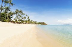 Crystal blue clear water and palms Royalty Free Stock Image