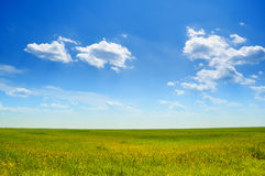 Crystal blue sky. Fresh early summer meadow under the blue sky Stock Images
