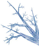 Crystal Branch Stock Images