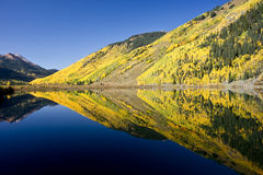 Crystal Clarity. Rocky Mountain foliage reflects in a clear mountain lake royalty free stock images