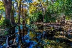 Crystal Clear Frio River Deep na floresta Fotografia de Stock