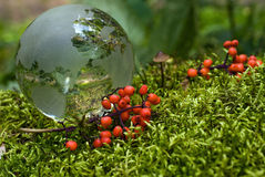 Crystal-clear globe on green moss Stock Images