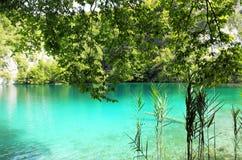 Crystal clear lake in Plitvice, Croatia Stock Photos