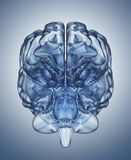 Crystal clear mind. Crystal  brain. Clipping Path included Royalty Free Stock Photos