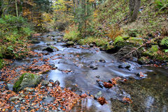 Crystal clear mountain  brook in autumn Royalty Free Stock Photography