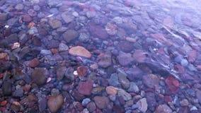 Crystal Clear Rocky Mountain Stream i Colorado arkivfilmer