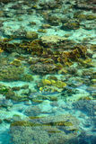 Crystal clear sea in Sipadan Mabul Royalty Free Stock Photography