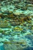 Crystal clear sea in Sipadan Mabul Royalty Free Stock Photography