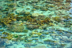Crystal clear sea in Sipadan Mabul Royalty Free Stock Photos