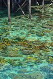 Crystal clear sea in Sipadan Mabul Stock Image