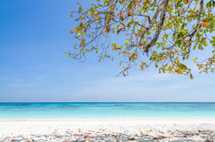 Crystal clear sea and white sand beach Stock Photos