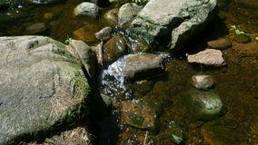 Crystal Clear Stream in einem Wald stock video footage